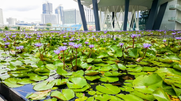 Things To Do in Singapore with Kids